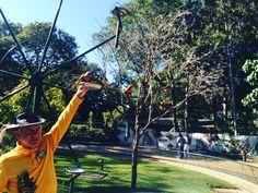 Currumbin Wildlife Sanctuary- free birds feeding.  #currumbinwildlifesanctuary #bridfeeding #GoldCoast #visitaustralia #VisitGoldCoast #visitqueensland #discoverqueensland #Australia #currumbin #4ussiestyle by 4ussiestyle http://ift.tt/1X9mXhV