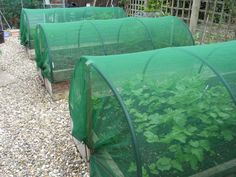 Raised vegetable beds, incorporating full crop protection