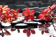 Branch Red Orchid with Zen Stones Reflection Premium Poster by crystalfoto at Art.com. On the right side of the Rodin and a little larger than the column of three.