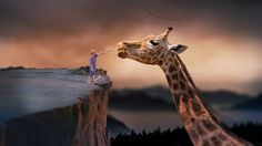 Free stock photos: Giraffe Power Supply Child Photo Manipulation - Free Image on StockKite List Of Endangered Species, Endorphin Release, Better Healthcare, Dream Fantasy, Hd Photos, Stock Photos, Photo Manipulation, Lightroom Presets, Dreaming Of You