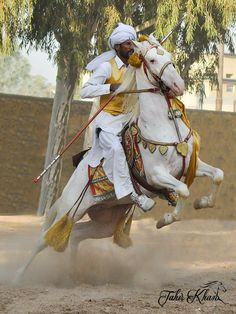 Pretty Horses, Beautiful Horses, Rare Horse Breeds, African Image, Marwari Horses, Horse Anatomy, Horse Costumes, Types Of Horses, Horse Girl