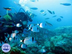 active holiday Greece 2021 Greece Culture, Greece Fashion, Diving Course, Heraklion, Greece Holiday, Minoan, Crete Greece, Going On Holiday, Snorkeling