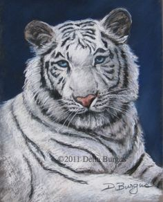 Wildlife Painting White Tiger Pastel by Della Burgus, painting by artist Art Helping Animals Tiger Drawing, Tiger Art, Oil Pastel Art, Pastel Paintings, Watercolor Tiger, Wildlife Paintings, Animal Drawings, Drawing Animals, Colorful Animals