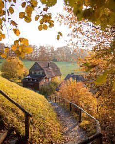 Golden autumn vista