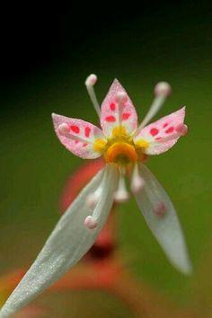 Dedicadas orquídeas!