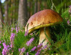 V zahradách poblíž lesa jsou podmínky pro pěstování hub ideální