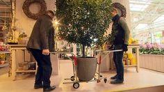Einfach genial   19.04.2016   19:50 UhrKübelträgerWenn im Frühling die Pflanzen wieder in den Garten können, müssen oft viele schwere Pflanzkübel getragen werden. Weil er des Schleppens leid war, ließ sich einTüftler etwas einfallen, um sich die Arbeit zu erleichtern. Erfindungen, Innovationen