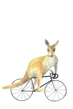 "Inside the Scene: ""Standert"" Feierabendrunde Bullet Journal, Animal Illustrations, Kangaroo, Friends, Animals, Road Racer Bike, Bicycle, Sketches, Gifts"
