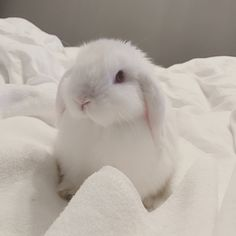 Meet Mick Our mini lop house rabbit Cute Bunny Pictures, Animal Pictures, Cute Baby Bunnies, Cute Cats, Mini Lop Bunnies, Mini Lop Rabbit, Bunny Rabbit, Fluffy Animals, Animals And Pets