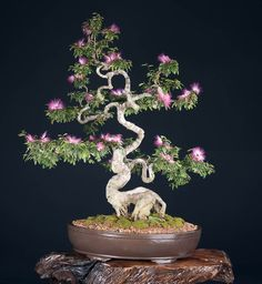 Sugira um nome para este Bonsai Bonsai Soil, Bonsai Art, Bonsai Plants, Bonsai Garden, Planting Plants, Bonsai Trees, Ikebana, Bonsai Tree Types, Miniature Trees