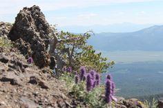 BEAUTY ON TOP OF MOUNTAIN IN IDAHO