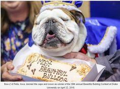 Snapback Hats for Men /& Women Dog Boston Terrier Lifeline Embroidery Black