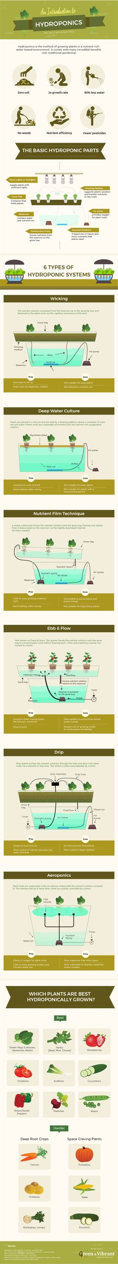 Hydroponic Gardening - The Definitive Guide + Infographic | Green and Vibrant
