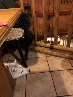 Wie lernt mein Hund ruhig im Restaurant zu sein? – Undercover Labrador Dog Love, Labrador, Restaurant, Siri, Dogs, Dog Care, Pooch Workout, Studying, Love