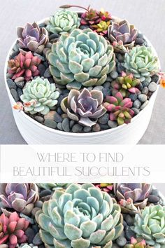 Need a good source for succulents, check out this online shop. Look no further on where to buy succulents online. This shop's plants are healthy and beautiful and ready to enjoy. Succulent Cuttings, Succulent Wreath, Succulent Pots, Planting Succulents, Plant Pots, Small Balcony Garden, Garden Bar, Garden Boxes, Beer Garden