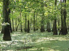 Louisiana green world