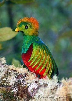 Aves multicolores | Mascotas