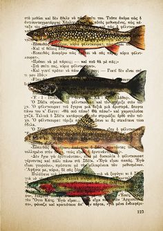 Salmon Fish drawing Sketch over Print of a Vintage Book Page Literature by ULTRASONICBOOM
