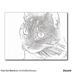 Get your hands on a customizable Cat postcard from Zazzle. Find a large selection of sizes and shapes for your postcard needs! Cat Sketch, Store Design, Cat Art, Kitty, Cats, Beautiful, Little Kitty, Gatos, Cat Doodle