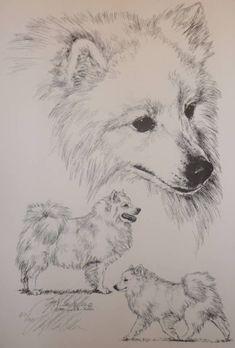 American Eskimo Dog (German Spitz) by Lyn St.Clair