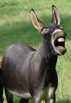 Donkeys make me laugh! How can anyone be sad with a donkey around!!!