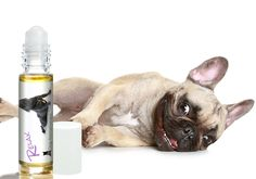 RELAX DOG AROMATHERAPY TAKES THE EDGE OFF YOUR FRENCH BULLDOG'S STRESS AND ANXIETY…NATURALLY Is Your French Bulldog Frantic When It Thunders? Do Fireworks Send Your Frenchie into Fearful Panic? Or is