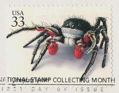 Habronattus americanus Stamp (wonder where to find this?)