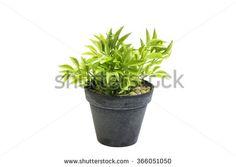 houseplants in grey pots - Google Search Houseplants, Planter Pots, Google Search, Grey, Gray, House Plants, Repose Gray, Indoor House Plants, Plant Pots