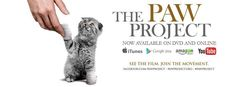 the paw project Big Cat Rescue, Animal Rescue, Cat Valentine, Christmas Cats, Big Cats, Cat Art, Lions, Your Pet, Cute Pictures