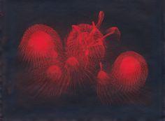 Fireworks , Cyanotype prints