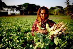 EL PAPEL DE LA MUJER EN LA AGRICULTURA MEXICANA. En nuestro país existen alrededor de doce millones de #Mujeres rurales que trabajan en horarios de doce horas o más al día, para contribuir en la #Alimentación y subsistencia de su #Familia y representan el cuarenta por ciento de la oferta agrícola en el mercado interno. Sin embargo, existe una enorme brecha de desigualdad que limita a las mujeres por su género y por su condición rural... Lee más dando click en la imagen.