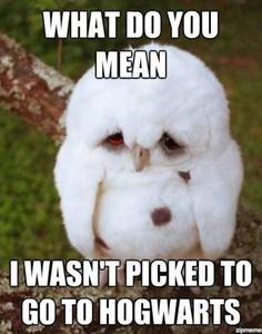 What do you mean I wasn't picked to go to Hogwarts. Sad owl.