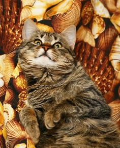 Holiday cat tips: Thanksgiving pet safety