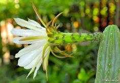 Cactus de flor más populares y otros consejos
