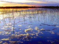 Okavango Delta, Botswana by verswe