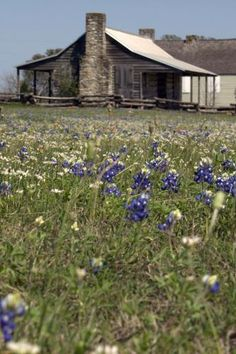 Independence, Texas and Bluebonnets