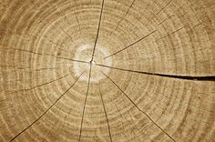 cracked wood texture: wood texture