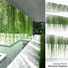 Tropical Landscaping, Backyard Landscaping, Creepers Plants, Wall Design, House Design, Landscape Architecture Design, Rooftop Garden, Plant Wall, Garden Design