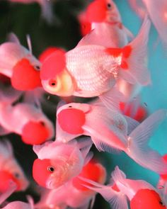 nonverbal is universal. Beautiful Fish, Exotic Fish, Art Plastique, Pink Aesthetic, Marine Life, Picture Wall, Beautiful Creatures, Aesthetic Pictures, Cute Wallpapers