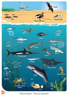 Classifying Animals, Exploration, Creature Design, Creative Kids, Arctic, Biology, Habitats, Kindergarten, Sardinia