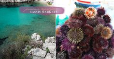 springmarkets-oursin-provence