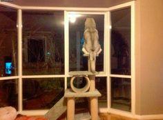 http://buzzly.fr/quand-les-chiens-se-prennent-pour-des-chats-le-depassement-de-fonction.html