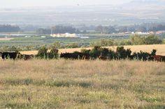 Nuestra ganadería (1)