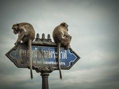 """""""Non ti parlo più!"""" ...querelle tra scimmie, in #thailandia #lol"""