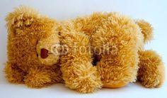 laying down teddy bear - Google Search