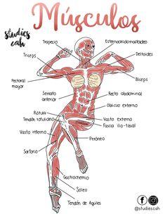 me Nail Desing bundesverband deutscher naildesigner e. Anatomy Study, Body Anatomy, Anatomy Reference, Medicine Notes, Medicine Student, Nursing School Notes, Human Anatomy And Physiology, Medical Anatomy, Medical Science