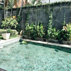 Everyone loves luxury swimming pool designs, aren't they? We love to watch luxurious swimming pool pictures because they are very pleasing to our eyes. Now, check out these luxury swimming pool designs. Outdoor Pool, Outdoor Spaces, Outdoor Gardens, Outdoor Living, Outdoor Decor, Little Pool, Small Pools, Small Backyards, Dream Pools