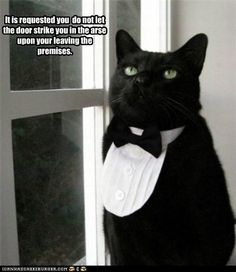 funny cat pictures - It is requested you  do not let the door strike you in the arse  upon your leaving the premises.