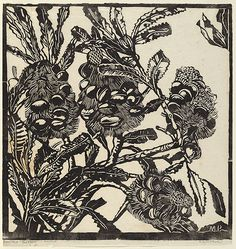 Margaret PRESTON, Banksia cobs