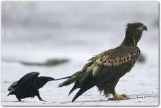 (25) Photos de Défendre les animaux et protéger la nature - Défendre les animaux et protéger la nature